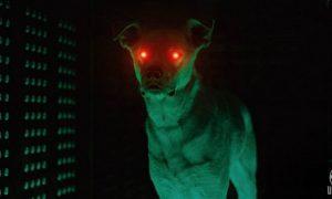 DC Universe Merilis Tampilan Resmi Di Live-Action Krypto The Superdog