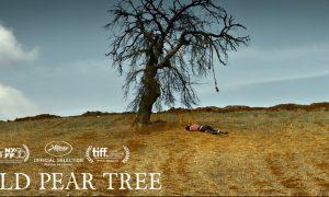 THE WILD PEAR TREE – Film Drama Penuh Lirik Humanis Antara Ayah Dan Anak