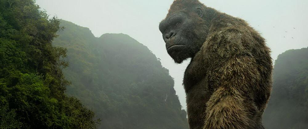 Godzilla vs Kong Mengonfirmasi Diproduksi di Australia