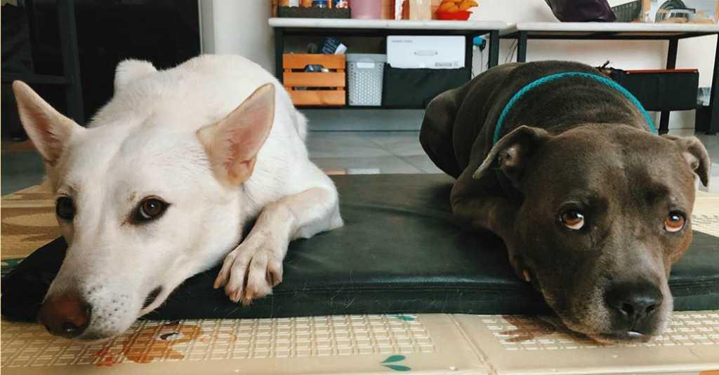 Kisah Persahabatan Anjing dan Manusia Yang Manis، Segera Tayang di Bioskop!  - Layar.id